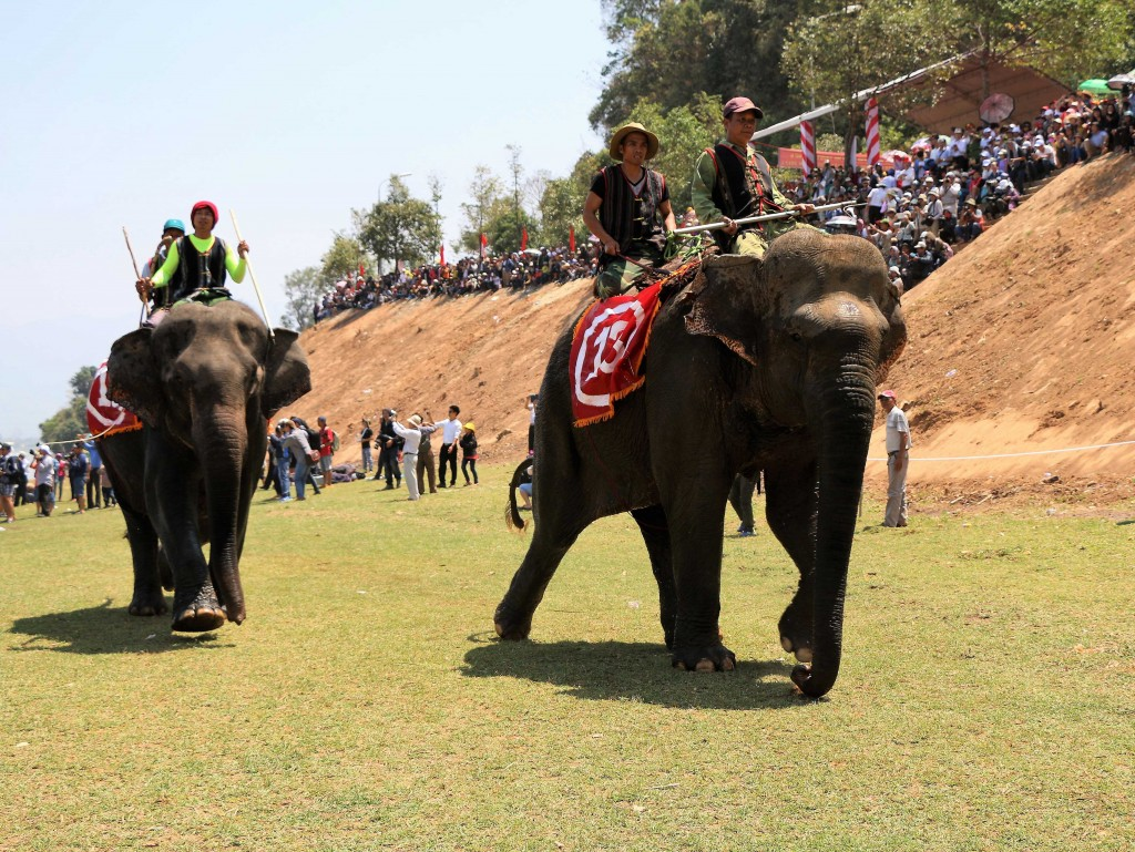 Elephant race in Vietnam