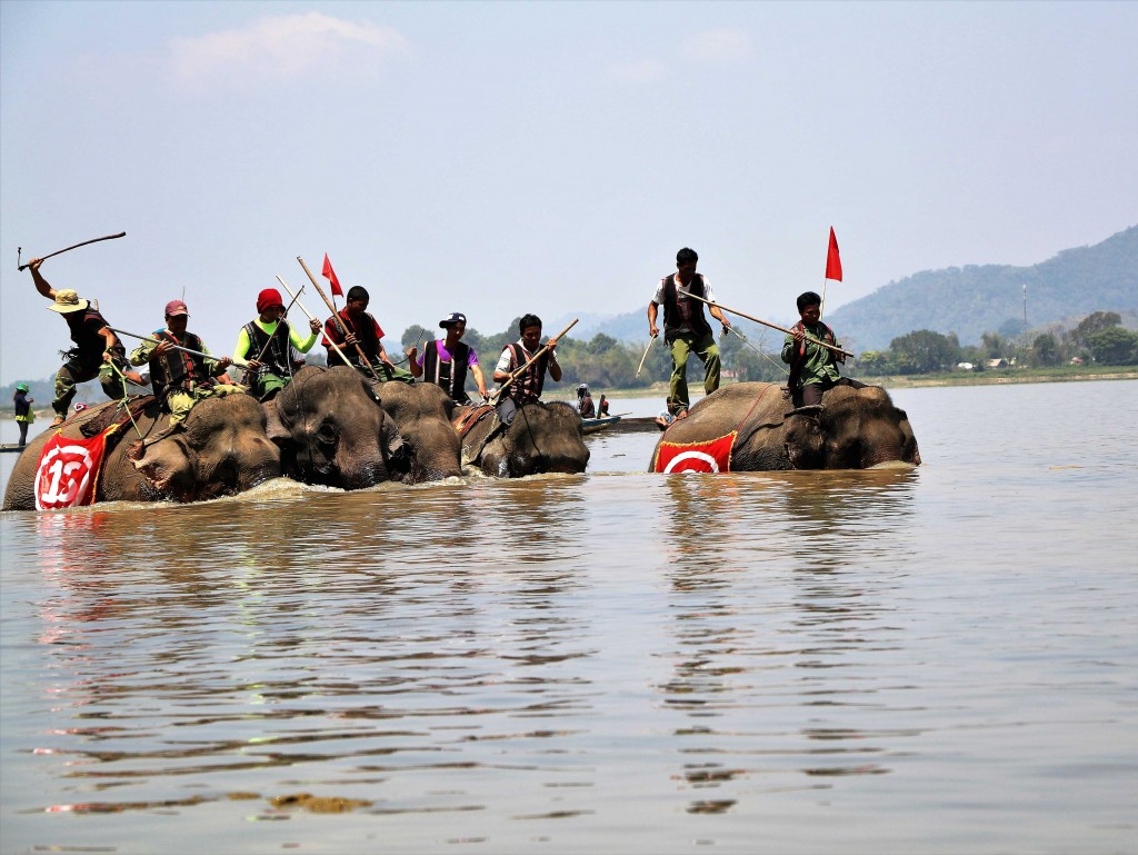 Elephant race in the Central Highlands