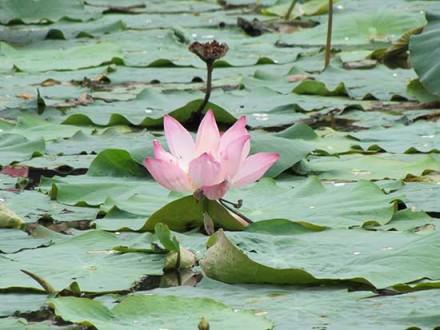 Watery_Mekong